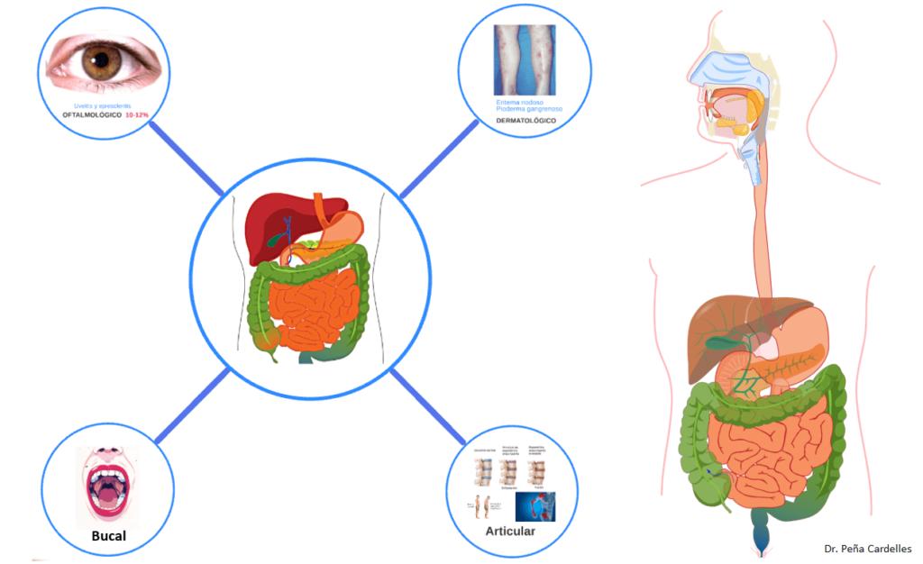 Interrelacion del sistema digestivo con otros sistemas