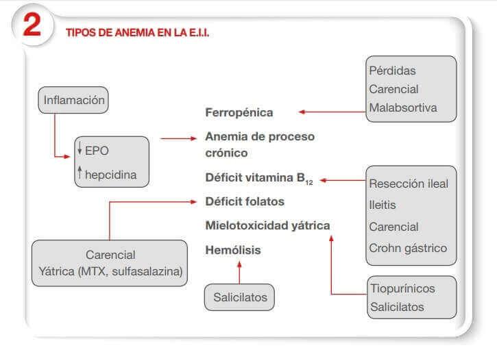 tipos de anemia en la eii